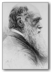 How Does Darwin S Theory Of Natural Selection Contradict God